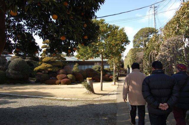 Kimura's pond